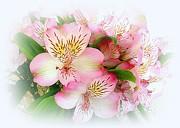 John Tidball  - Floral Greetings