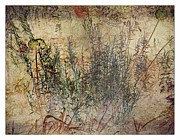 Liz  Alderdice - Floral Musings