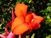 Van Ness - Floral Orange
