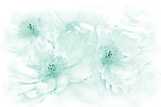 Green Florals Prints - Floral Peonies in Teal Print by Jennie Marie Schell