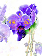Fine Art Original Mixed Media Prints - Floral series - Orchid Print by Moon Stumpp