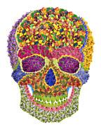 Aleksandr Volkov - Floral skull