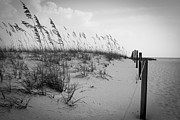 Ray Devlin - Florida Beach Dunes