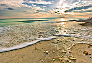 Eszra Tanner - Florida Beach Shells...