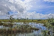 Deep Blue River Prints - Florida Everglades 0173 Print by Rudy Umans