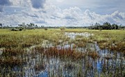 florida Everglades 0177 Print by Rudy Umans