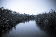 Miami River Photos - Florida Everglades by Madeline Ellis