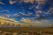 Swank Photography - Florida Everglades...