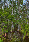 Swank Photography - Florida Everglades