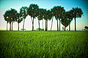Shanna Gillette Prints - Florida Grass and Palms Print by Shanna Gillette