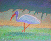 Warm Colors Pastels - Florida Ibis by Daniel Wend