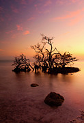 Lone Tree Framed Prints - Florida Keys Sunset Framed Print by Mike  Dawson