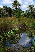 Florida Swamp Photos - Florida Lagoon by Joseph G Holland