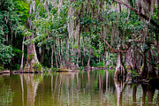 Florida Trees Framed Prints - Florida Naturally 2 Framed Print by Christopher Holmes