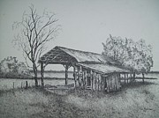 Sheds Drawings Posters - Florida Old Shed Poster by Tom Rechsteiner