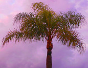 Bruce Tubman - Florida Palm Tree 3