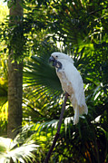 Jeff Holbrook Art - Florida Parrot by Jeff Holbrook
