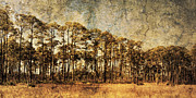 Fantasy Tree Art Prints - Florida Pine 4 Print by Skip Nall