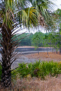 Saw Palmetto Prints - Florida Pond Print by W Chris Fooshee