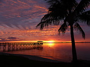 Elaine Franklin - Florida Sunset