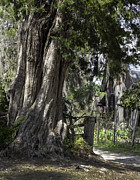 Lynn Palmer - Florida Treebeard