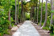 Green Key Park Framed Prints - Florida walkway Framed Print by Carey Chen