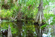 Alligator Bayou Photos - Florida Wetland by Carey Chen