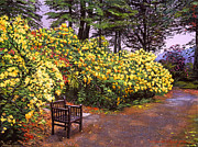 Pathway Paintings - Flourishing Garden by David Lloyd Glover