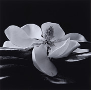 Haruo Kaneko - Flower 06