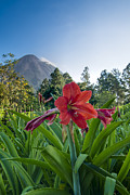 Stratovolcano Posters - Flower and Arenal Poster by Andy-Kim Moeller