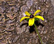Susan Leggett - Flower and Bark