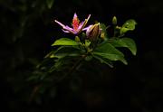 Noel Elliot - Flower And Bud