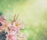 Mythja  Photography - Flower background