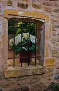 Window Bars Prints - Flower behind bars Print by Dany Lison