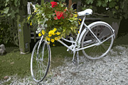 Mechanism Photo Originals - Flower Bike by Graham Foulkes