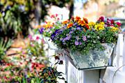Lynn Jordan - Flower Box and a Picket...