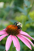 Green Day Art - Flower Bumble Bee by Jt PhotoDesign
