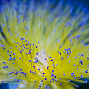Abstract Photos - Flower by Juli Scalzi