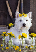 Westie Art - Flower Child by Edward Fielding