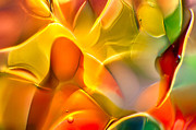Macro Photos Glass Art - Flower Child by Omaste Witkowski