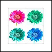 John Tidball  - Flower Collage 3