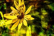 Barry Jones - Flower Dance