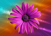 Vero Posters - Flower Empowered Poster by Bill Tiepelman