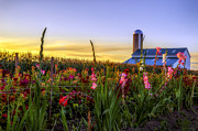 Amish Photographs Art - Flower farm by Mark Papke