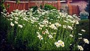 Leslie Hunziker - Flower Gardens