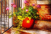 Mike Savad - Flower - Geraniums - One fine sunny day