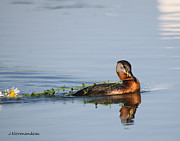 All - Flower Grebe by Sarah  Lalonde