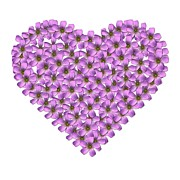 Background Prints - Flower Heart Print by Jacqui Martin