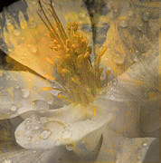 Photos Of Autumn Mixed Media - Flower III by Yanni Theodorou