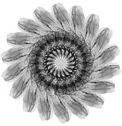 Flower Display Digital Art Posters - Flower Illustration in black and White Poster by Steven Jones